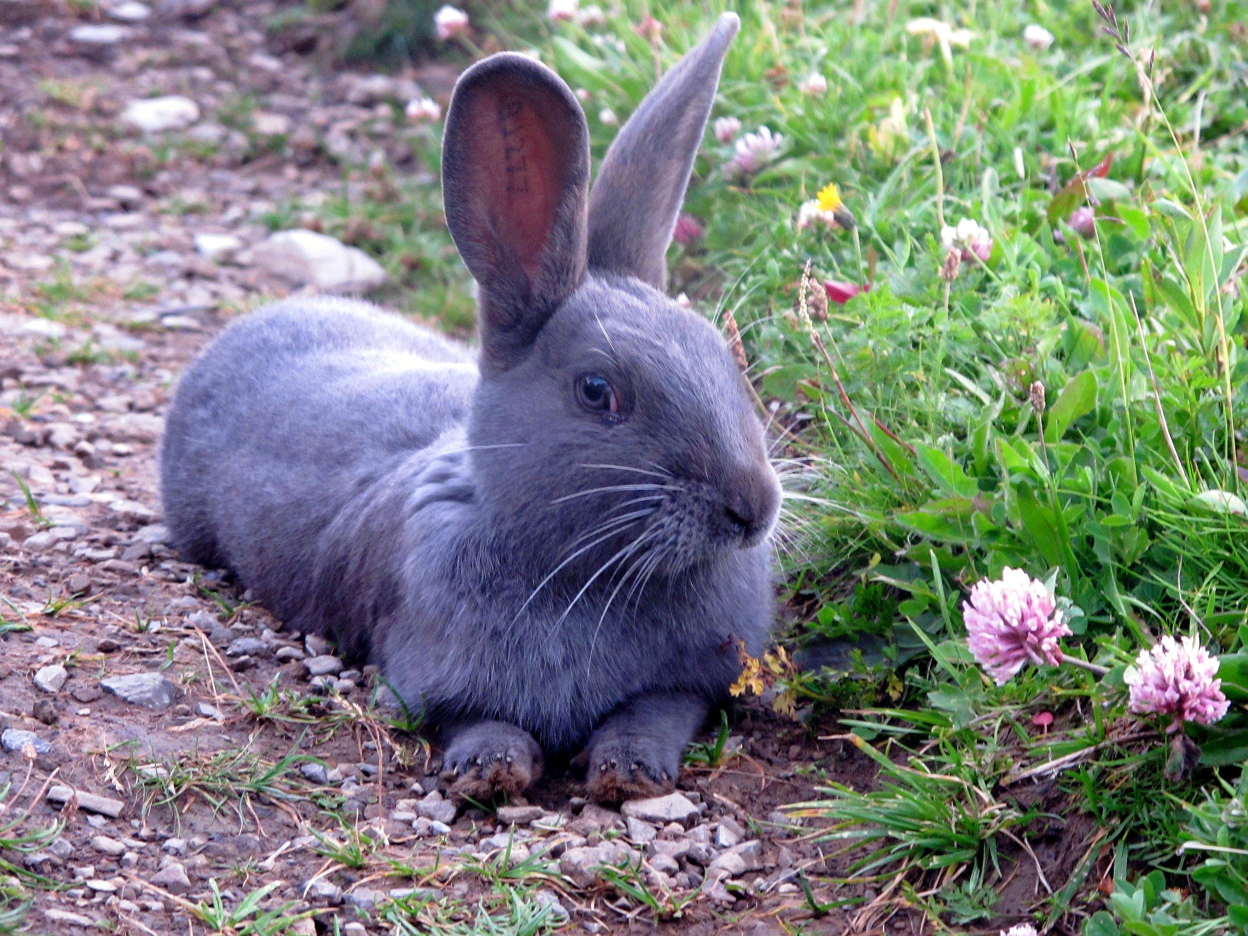 Das glücklichste Kaninchen der Welt auf 2000 Meter Höhe